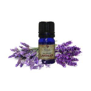 P000577 100% Organic Lavender Essential Oil 1
